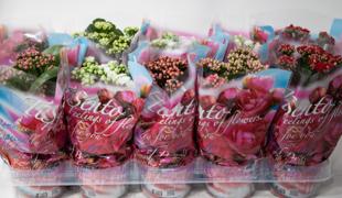 Cserepes virágzó szobanövények